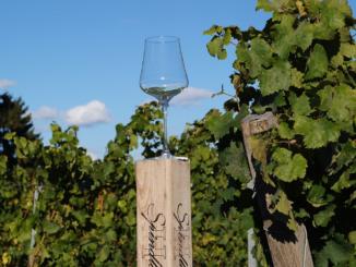 Wijnglas in wijngaard