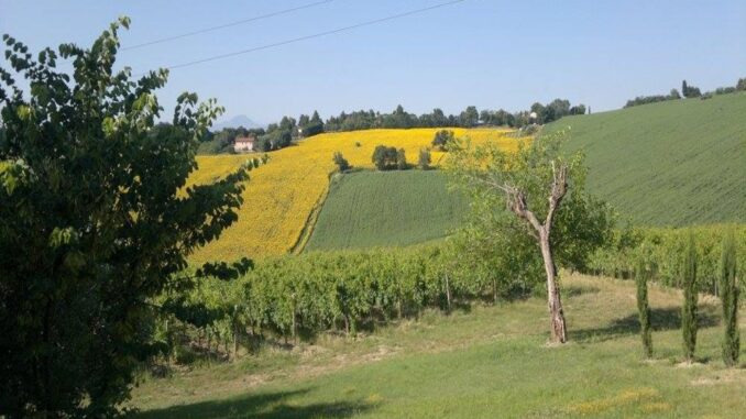 Mooi panorama in Le Marche