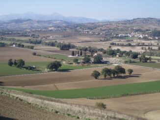 Archeologische site Suasa