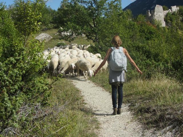 Slenteren met schapen